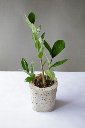 Basic Cylindrical Concrete Planter 1 Art And Soil