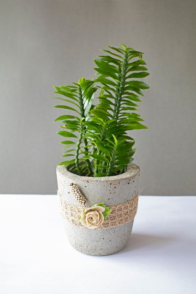 Cylindrical Concrete Planter With Jute Lace And Flowers 1 Art And Soil