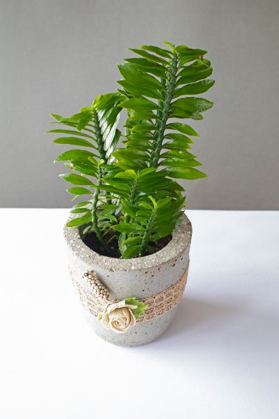 Cylindrical Concrete Planter With Jute Lace And Flowers 2 Art And Soil