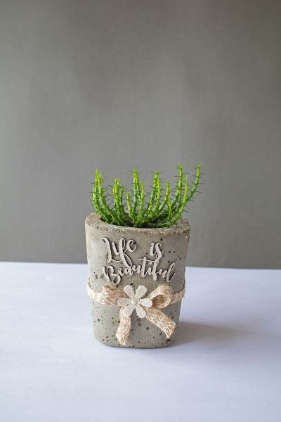 Small Cylindrical Concrete Planter 1 Art And Soil