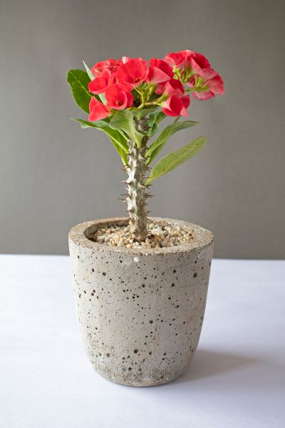Tall Cylindrical Concrete Planter 3 Art And Soil