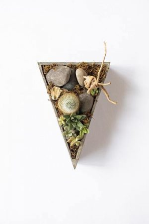 Triangle Succulents